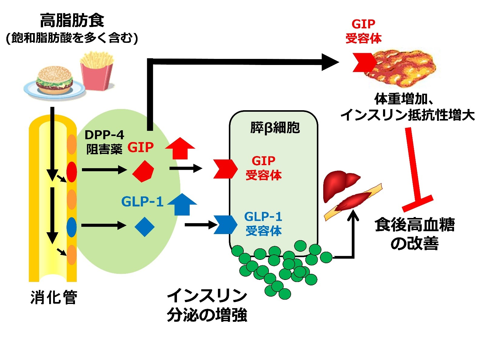 201712矢部DrDPP4阻害1