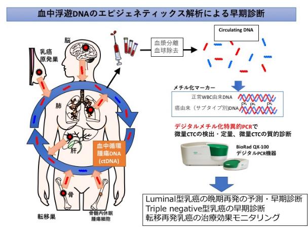 血中浮遊DNAのエピジェネティックス解析による早期診断